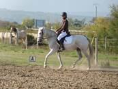 HORSE RIDING Equus Caballus