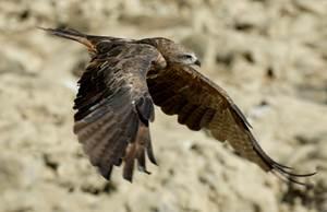 Les Oiseaux des Concluses de Lussan
