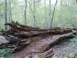 Du bois mort plein de vie