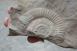 Fossiles qui sont'ils ?