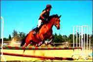 Stage Equitation : Tous à cheval