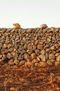 Minorque, paysage de pierre sèche