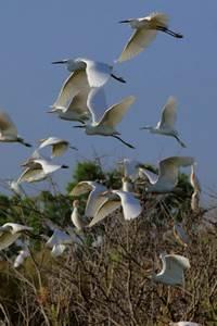 Visite guidée de la Réserve Naturelle Régionale du Scamandre