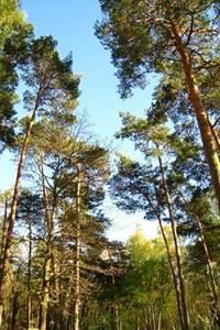 Secrets des arbres de la forêt