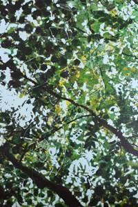 """""""L'ombre des arbres"""""""