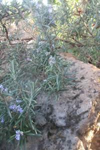 Randonnée - Herbes de provence