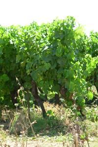 Viticulture, nature et paysages