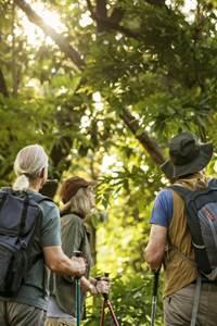 Escapades nature - Histoires d'arbres