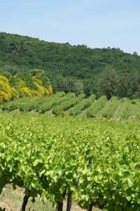 Balade vigne et vin à Gaujac
