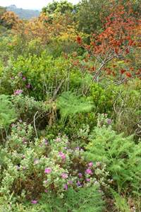 Secrets de plantes en herbier