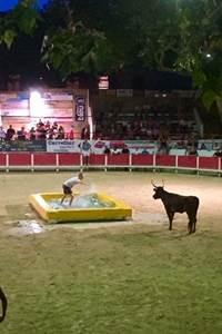 Toros piscine aux arènes de Remoulins - Juillet 2020