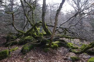 Explorez la forêt mystérieuse