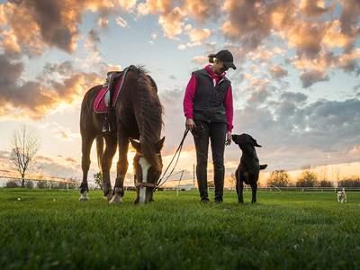 Bouguenais Sport Canin