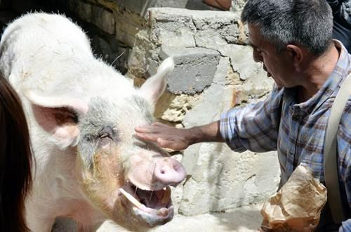 boul le cochon ©