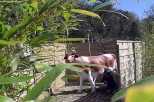 village des enfants à MONTAGNAC vache ©