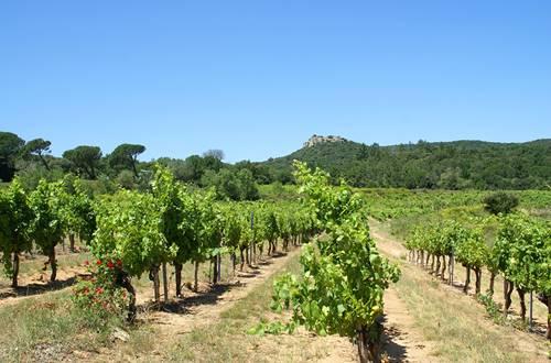 Vignoble de la vallée du Rhône ©