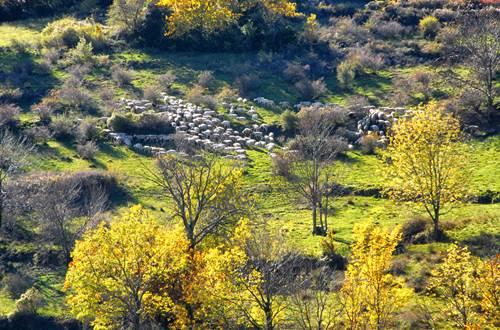 sudceven-pastoralisme ©