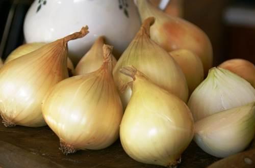 A déguster: l'oignon doux des Cévennes  ©