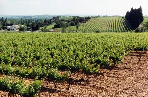 montfrin;gard;vin;vignoble © parc saint charles