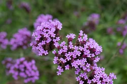 Herbes Aromatiques ©