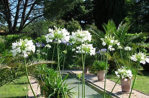 jardin du Mas du Caroubier ©