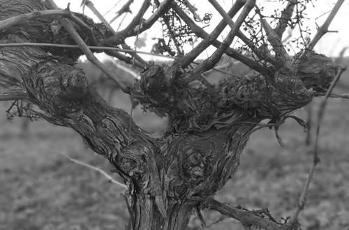 Les vignerons de ST Dézéry ©