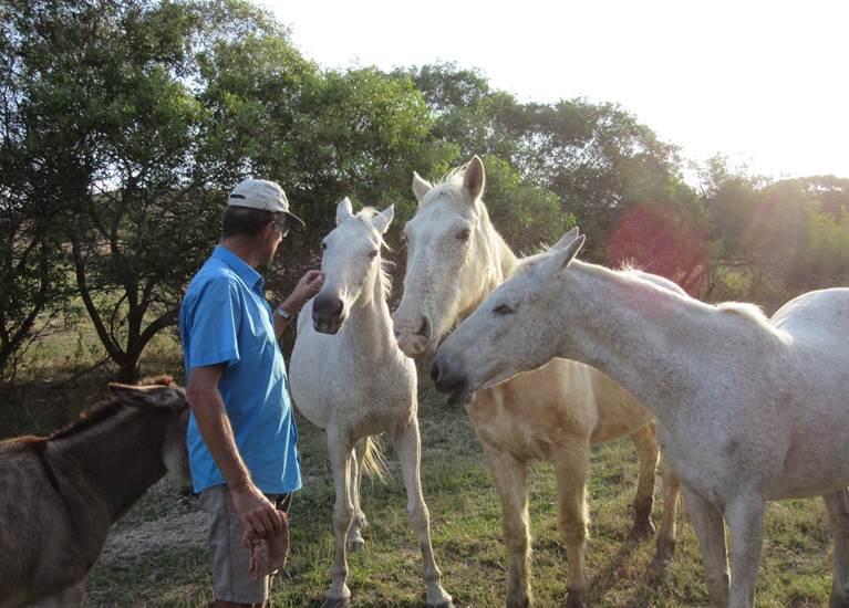 Les chevaux du gîte